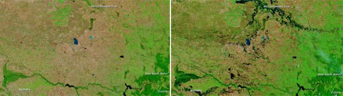 Australia wybucha zielenią. Czy to dobrze?