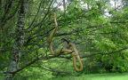 Wąż wił się po drzewie