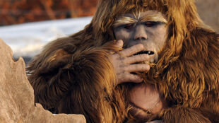 Ćwiczenia w zoo na wypadek ucieczki. Dostał pracownik przebrany za goryla
